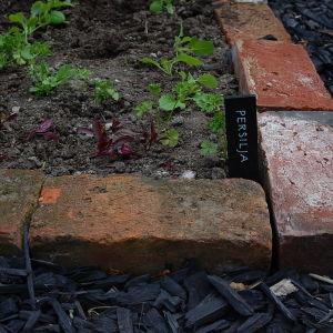 Ett hörn med planterad persilja i poatgere-trädgården
