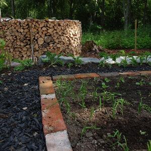 Grönkål och lök i potagere-trädgården