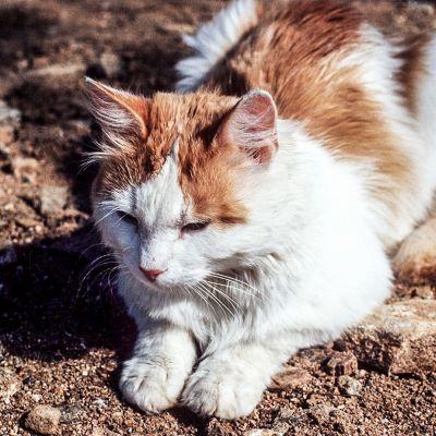 Kissa maassa.