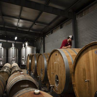 Kuvassa on australialainen viinitila.