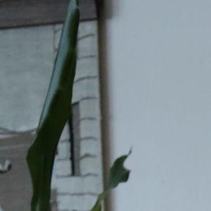 En senior går genom en korridor med rollator.