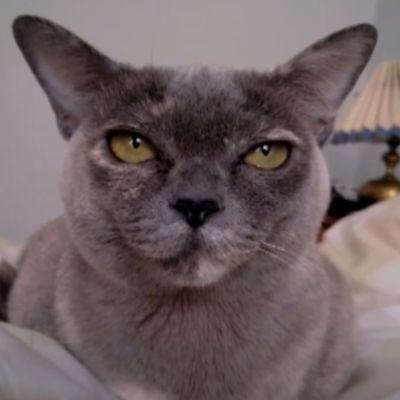 Katten Vivi