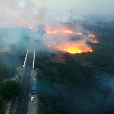 Skogsbrand i Pantanal i Brasilien