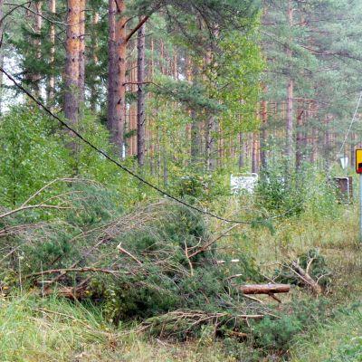 Myrsky teki tuhoja Porissa 27.9.