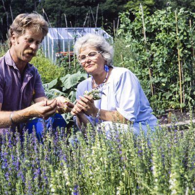 Tv-ohjelma Viherpeukalon kuvauksissa puutarhuri Aarno Kasvi ja toimittaja Tarja Flemming tutkivat yrttipenkkiä.
