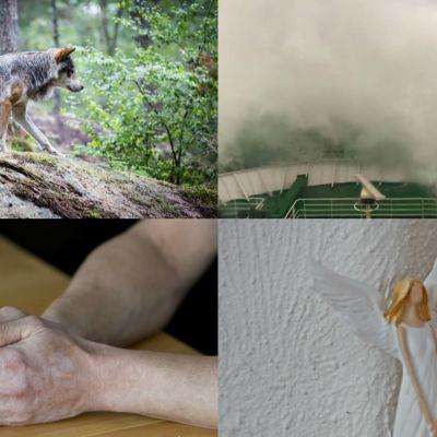 Ett bildcollage av en varg, en storm på Kvarken, en mans händer och en prydnadsängel.