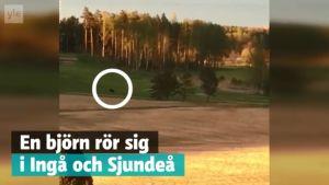 En skärmdump från en video där en björn rör sig i Ingå och Sjundeå
