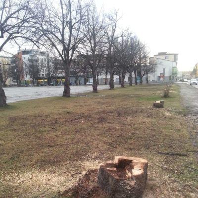 Puita kaadettu puistossa