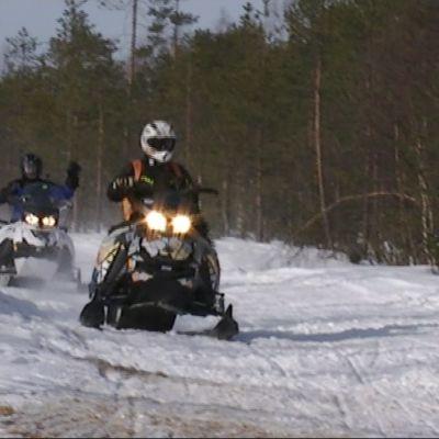 Moottorikelkkailun suosio kasvaa vuosi vuodelta. Rovaniemen alueella kulkee kaikkiaan 1100 kilometriä kelkkareittejä- ja uria.