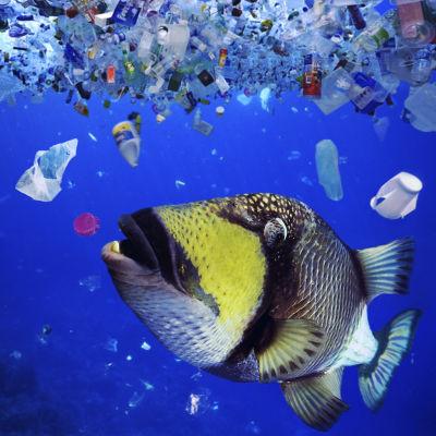 Kala syö meressä kelluvaa muovijätettä.