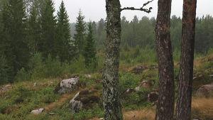 Platsen där en av de åtta vindmöllorna kommer att resas