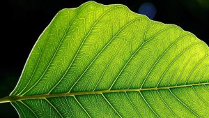 närbild av blad