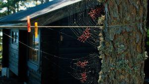 Nina Katchadourian gör konst av spindelnät