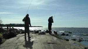 Sikfiske om våren utanför Helsingfors.