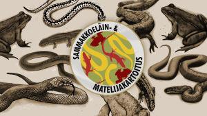 sammakkoeläin -ja matelijakartoitus uusi logo