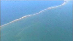 Blågröna alger till havs