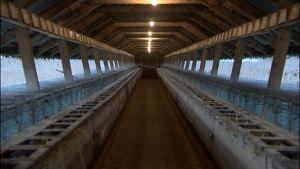 Skugghus på pälsfarm