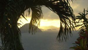 Palmunlehvät huojuvat paratiisissa