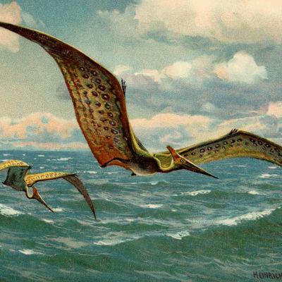 Lentävä hirmulisko pteranodon. Maalaus Heinrich Harder (1858-1935)