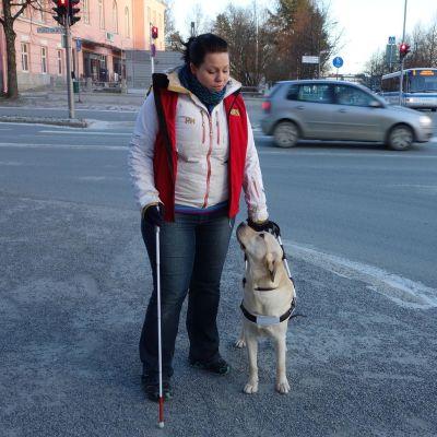 Osaskoiranohjaaja Sonja Suutarinen ja labradorinnoutaja Billie kävelyllä Kuopiossa.