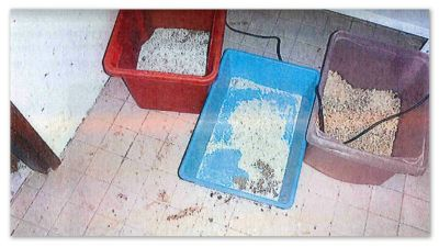 Lådor med kattsand och kattbajs, bild ur polisprotokoll