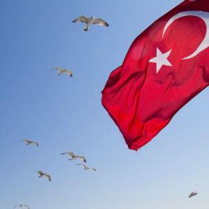 Turkiets flagga mot en blå himmel med fåglar som flyger.