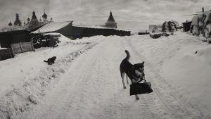 Ett av fotografen Pentti Sammallahtis favoriter ur hans egen produktion föreställer en hund som är på väg till butiken med sin ägares väska i munnen.