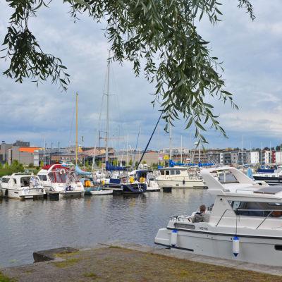 Flera motorbåtar och segelbåtar är förtöjda vid några bryggor i Borgå å. Bilden är tagen från land så att den översta delen av bilden skyms av en nedhängande gren från trädet intill ån.