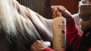 Hevosen harjaan suihkutetaan hoitoainetta