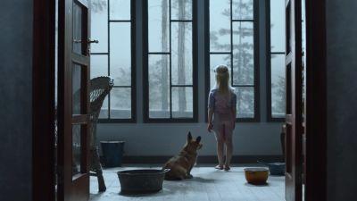Koira ja tyttö tuijottavat ikkunasta ulos vesisateeseen.