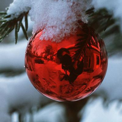 En röd julgransboll med lite snö på hänger i en gran.