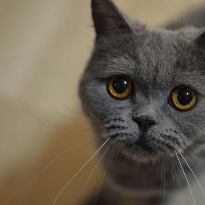 En katt.