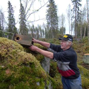 Rainer Ilkka har hittat en av flygekorrholkarna som tidigare satt på träden i området.