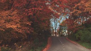Bild på väg i Pargas.