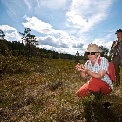 Ylitarkastaja Sanna-Kaisa Rautio ottaa näytteitä Kaavin Lakkanevan suolla. Taustalla maanomistajan edustaja Seppo Räsänen.