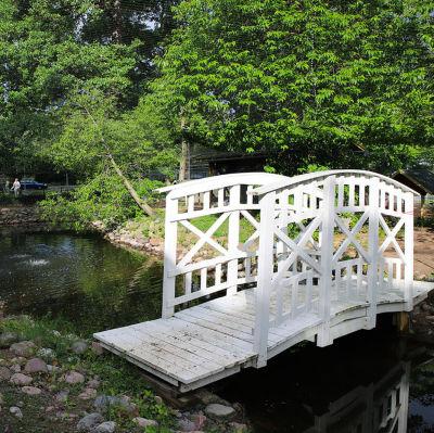 Lintulammikko Kupittaanpuistossa kuvattu heinäkuussa.
