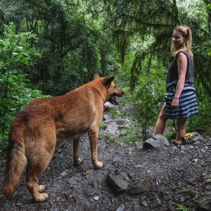 En kvinna står i en skog och tittar på en stor hund som står bredvid henne.