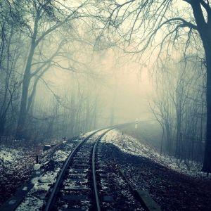 Tågspår i skogen.