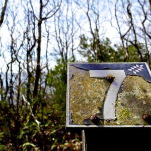 Taulu, jossa numero seitsemän. Takana metsää.