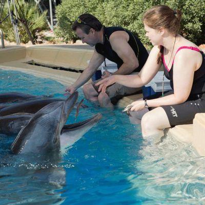 Delfinerna utfodras i Attica Park
