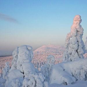 Upplega på träd vid Luosto-fjället i Lappland.