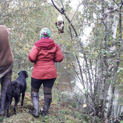 Ihmisiä ja koiria metsässä.