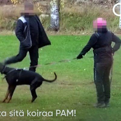 Kuvakaappaus Oikeutta eläimille -yhdistyksen julkistamalta videolta.