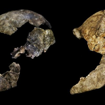 Homo Naledi; kranium