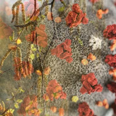 En bild av björkpollen och en förstoring av coronaviruset sammansmultna.