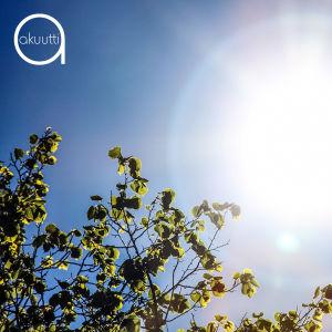 Aurinko ja koivunoksia
