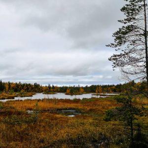 Bild på Bergö vandringsled tagen i oktober.