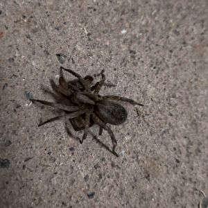 Tre bilder på en spindel.