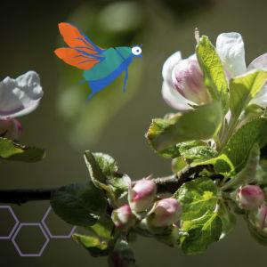 Pölyttäjiä omenapuussa.