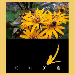 Kuvakaappaus puhelimen Google Kuvat -sovelluksesta: Tekoälytoiminto Lensin ikoni.